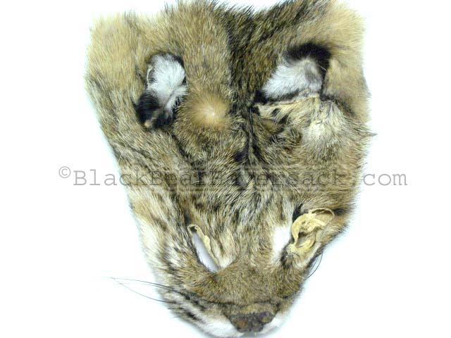 Bobcat Fur