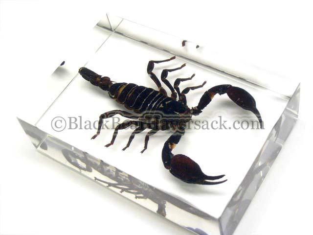 Scorpion Paperweight
